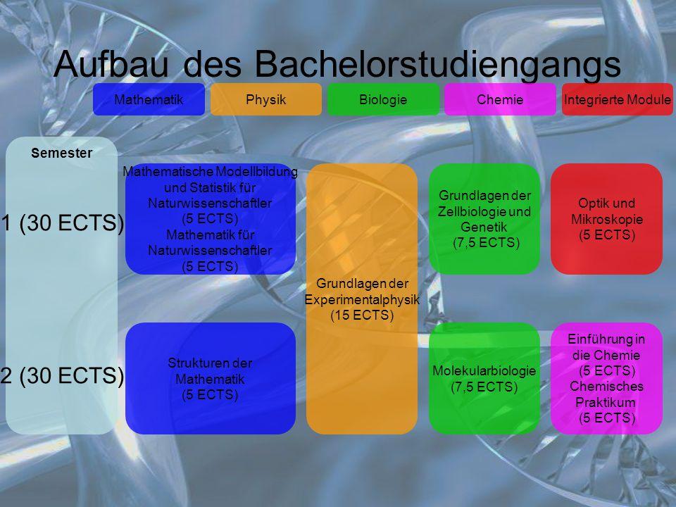 Aufbau des Bachelorstudiengangs