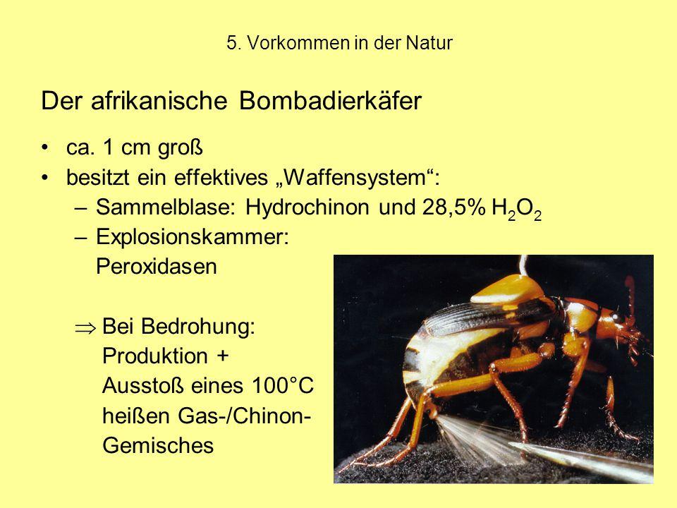 Der afrikanische Bombadierkäfer