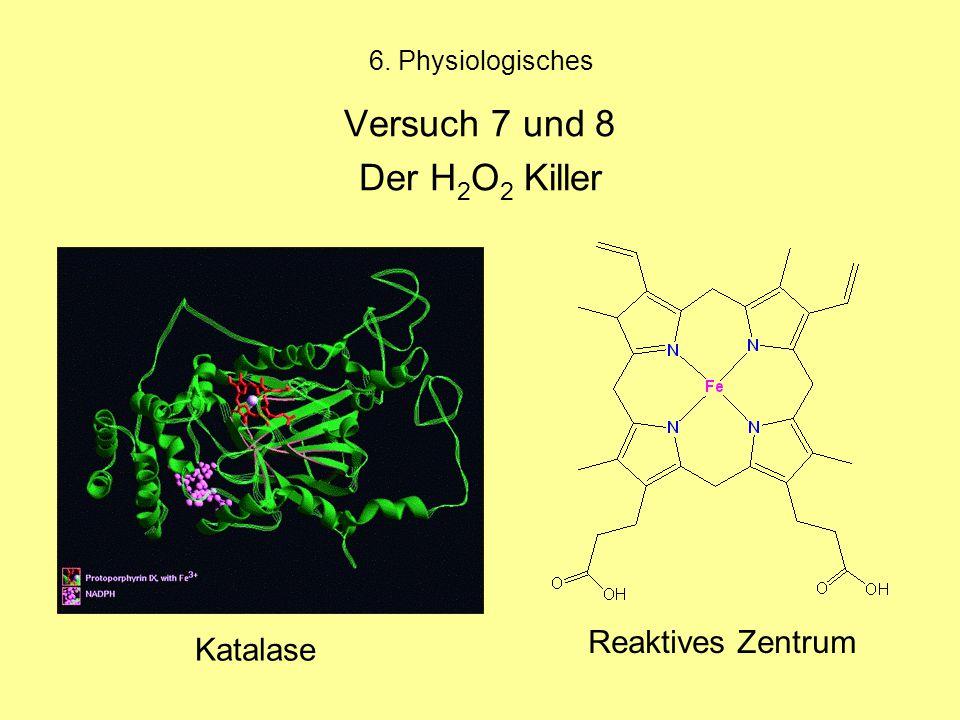 Versuch 7 und 8 Der H2O2 Killer Reaktives Zentrum Katalase