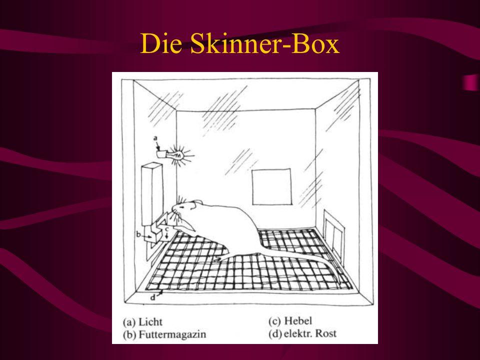 Die Skinner-Box