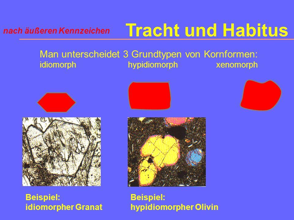 Tracht und Habitus Man unterscheidet 3 Grundtypen von Kornformen: