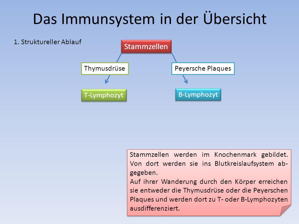 Das Immunsystem in der Übersicht