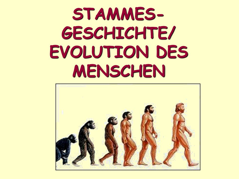 STAMMES-GESCHICHTE/ EVOLUTION DES MENSCHEN