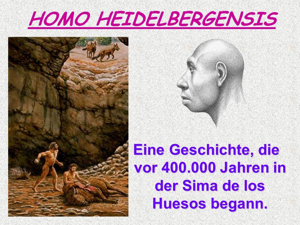 HOMO HEIDELBERGENSIS Eine Geschichte, die vor 400.000 Jahren in der Sima de los Huesos begann.