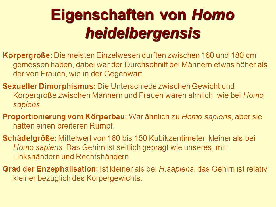 Eigenschaften von Homo heidelbergensis