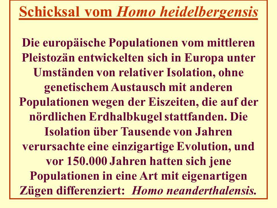 Schicksal vom Homo heidelbergensis