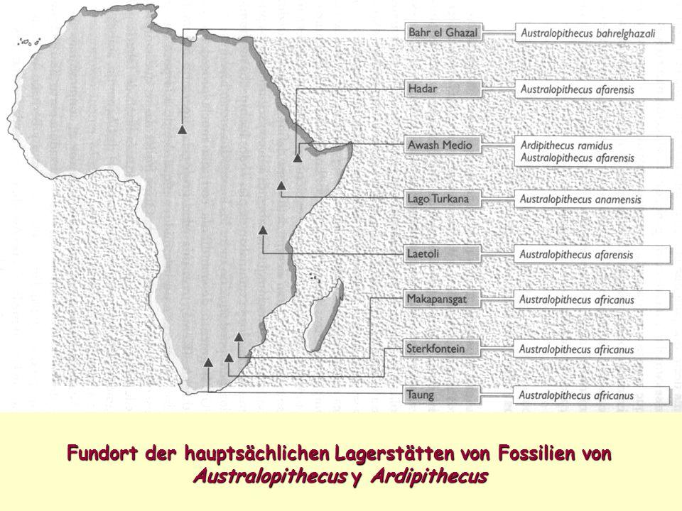 Fundort der hauptsächlichen Lagerstätten von Fossilien von Australopithecus y Ardipithecus