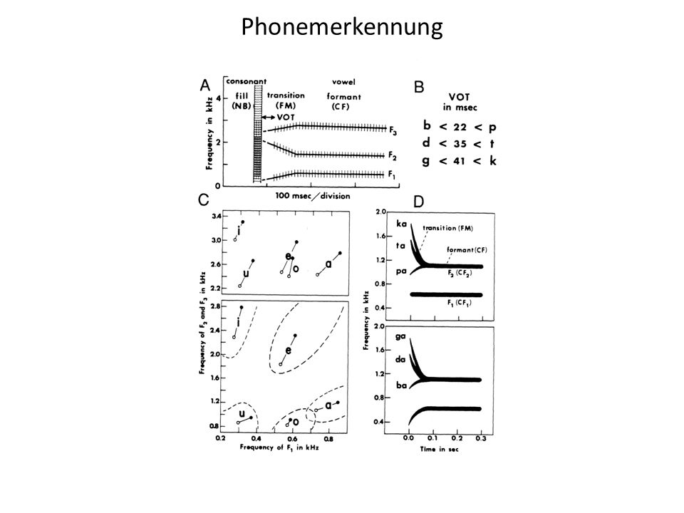 Phonemerkennung