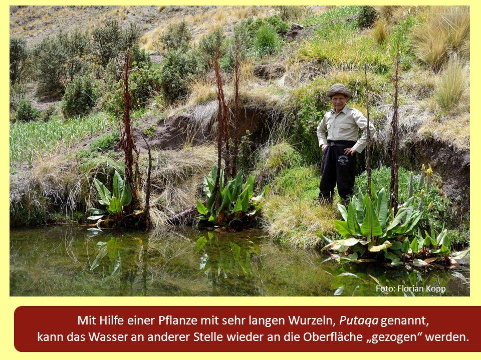 Mit Hilfe einer Pflanze mit sehr langen Wurzeln, Putaqa genannt,