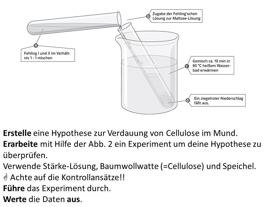 Erstelle eine Hypothese zur Verdauung von Cellulose im Mund.