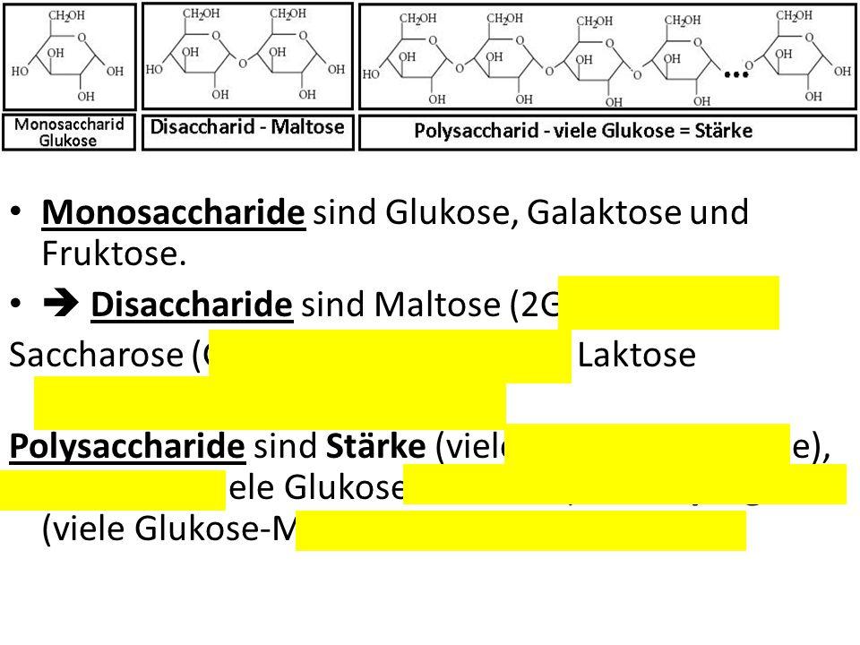 Monosaccharide sind Glukose, Galaktose und Fruktose.