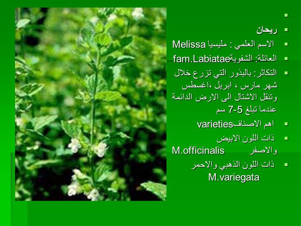 ريحان. الاسم العلمي : مليسيا Melissa. العائلة: الشفويةfam.Labiatae.
