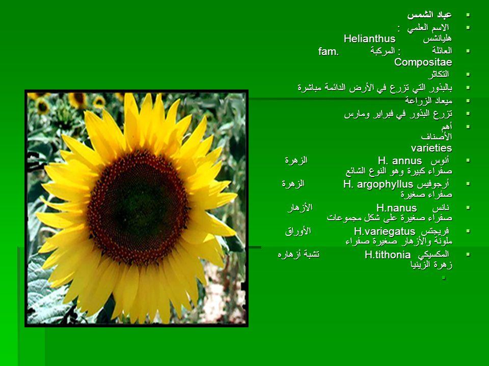 عباد الشمس الاسم العلمي : هليانشس Helianthus العائلة : المركبة fam. Compositae.