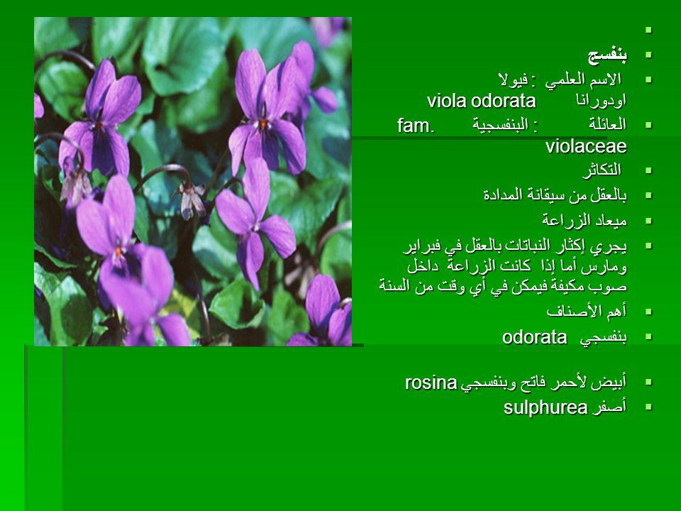 بنفسج. الاسم العلمي : فيولا اودورانا viola odorata. العائلة : البنفسجية fam. violaceae.