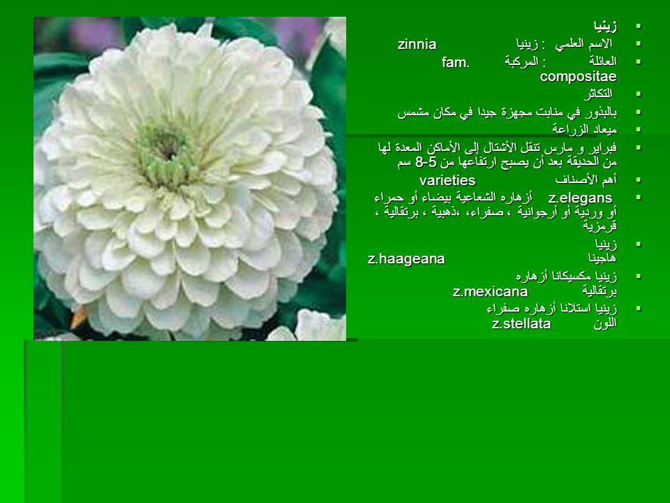 زينيا الاسم العلمي : زينيا zinnia. العائلة : المركبة fam. compositae.