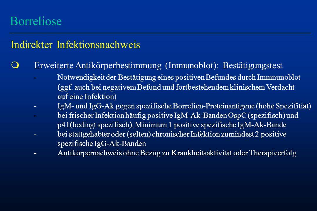 Borreliose Indirekter Infektionsnachweis