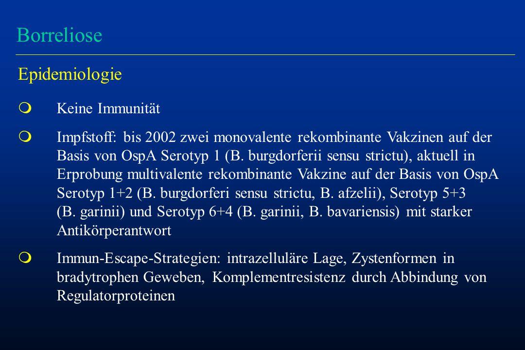 Borreliose Epidemiologie Keine Immunität