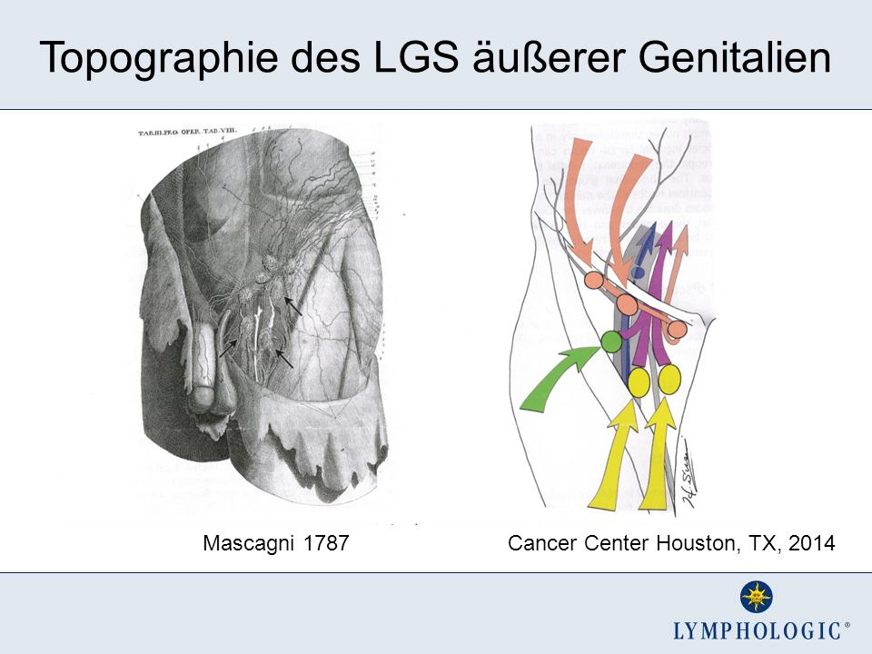 Topographie des LGS äußerer Genitalien