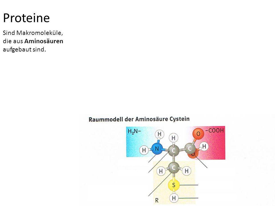 Proteine Sind Makromoleküle, die aus Aminosäuren aufgebaut sind.