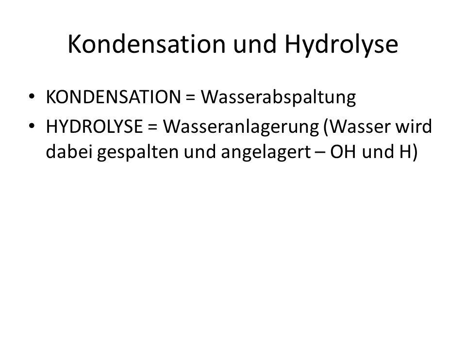 Kondensation und Hydrolyse