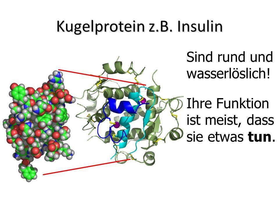 Kugelprotein z.B. Insulin