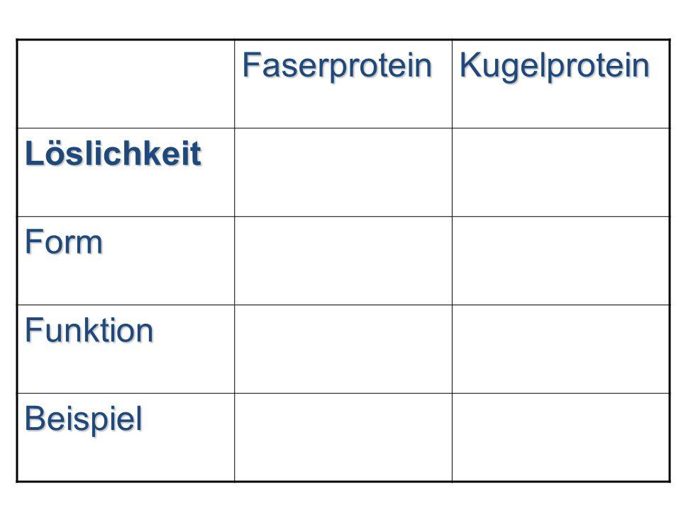 Faserprotein Kugelprotein Löslichkeit Form Funktion Beispiel 30