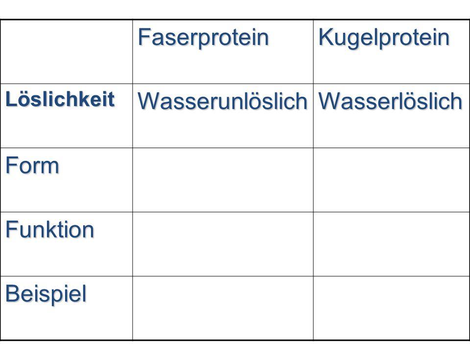 Faserprotein Kugelprotein Wasserunlöslich Wasserlöslich Form Funktion