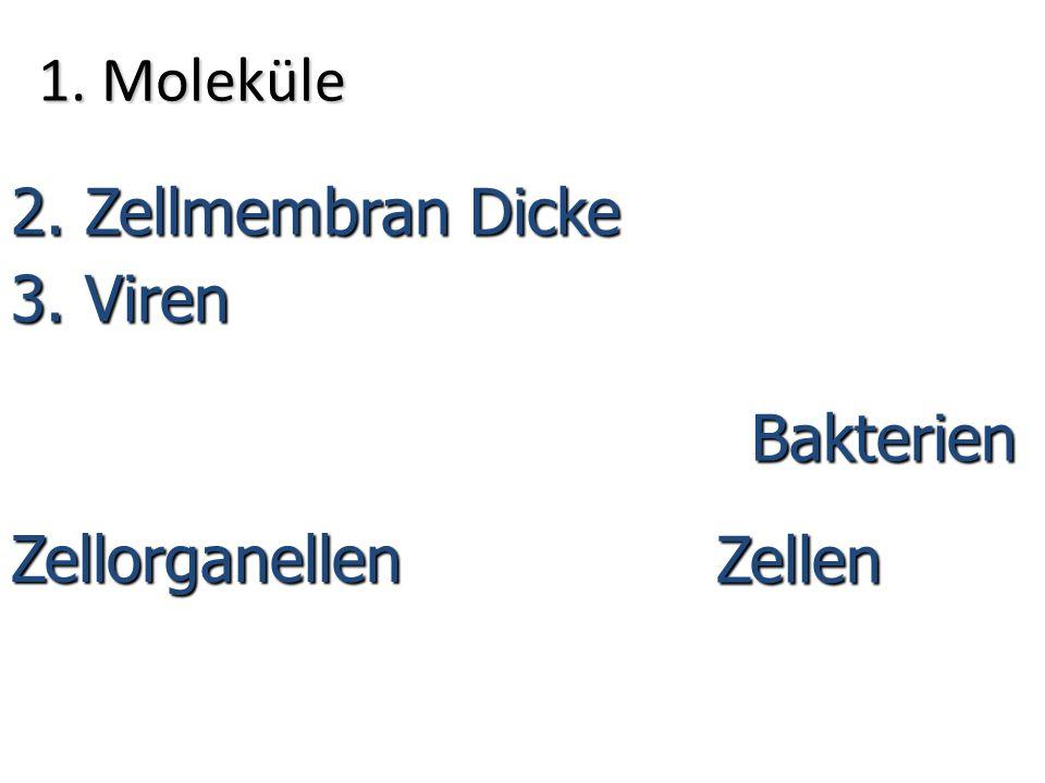 1. Moleküle 2. Zellmembran Dicke 3. Viren Bakterien Zellen Zellorganellen