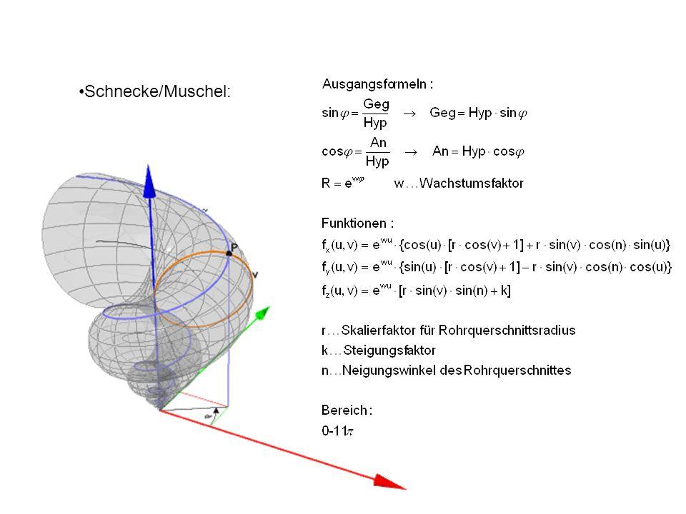 Schnecke/Muschel: