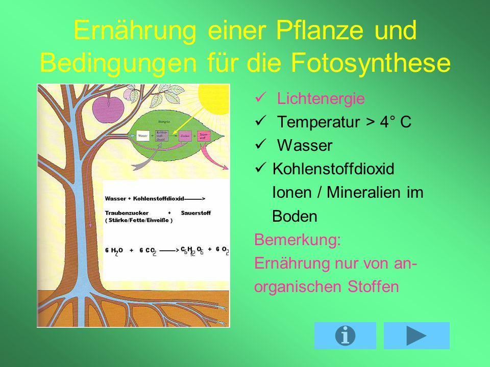 Ernährung einer Pflanze und Bedingungen für die Fotosynthese