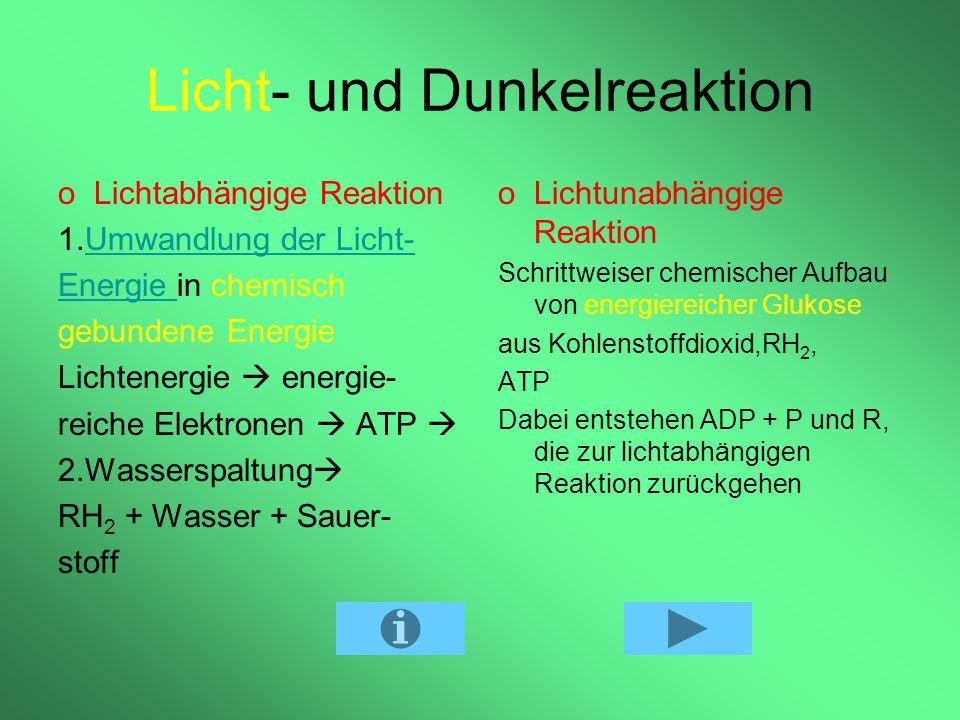 Licht- und Dunkelreaktion