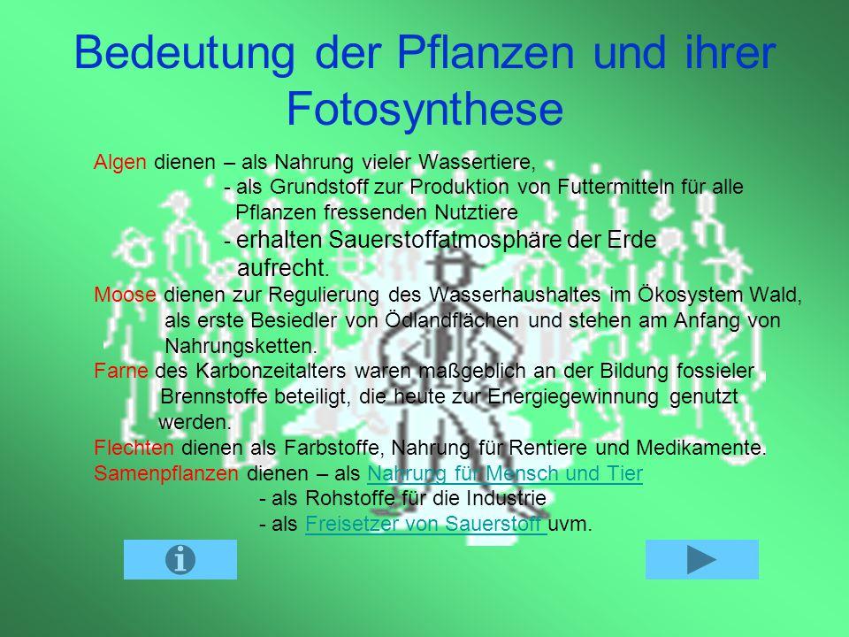 Bedeutung der Pflanzen und ihrer Fotosynthese