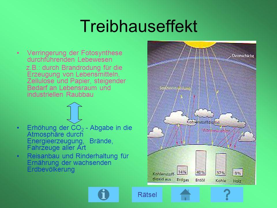 Treibhauseffekt Verringerung der Fotosynthese durchführenden Lebewesen