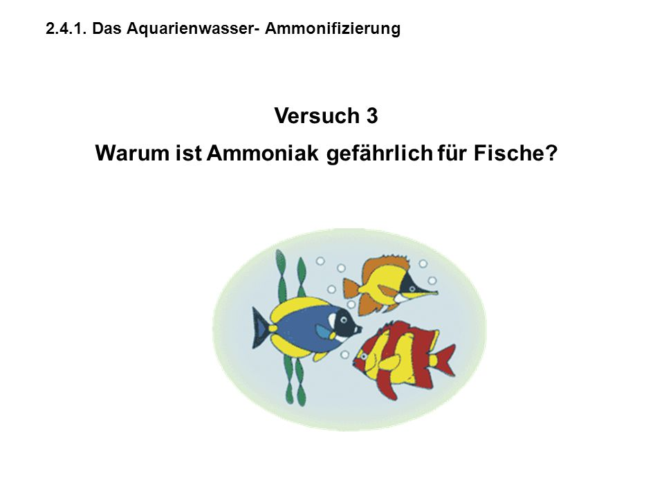 2.4.1. Das Aquarienwasser- Ammonifizierung