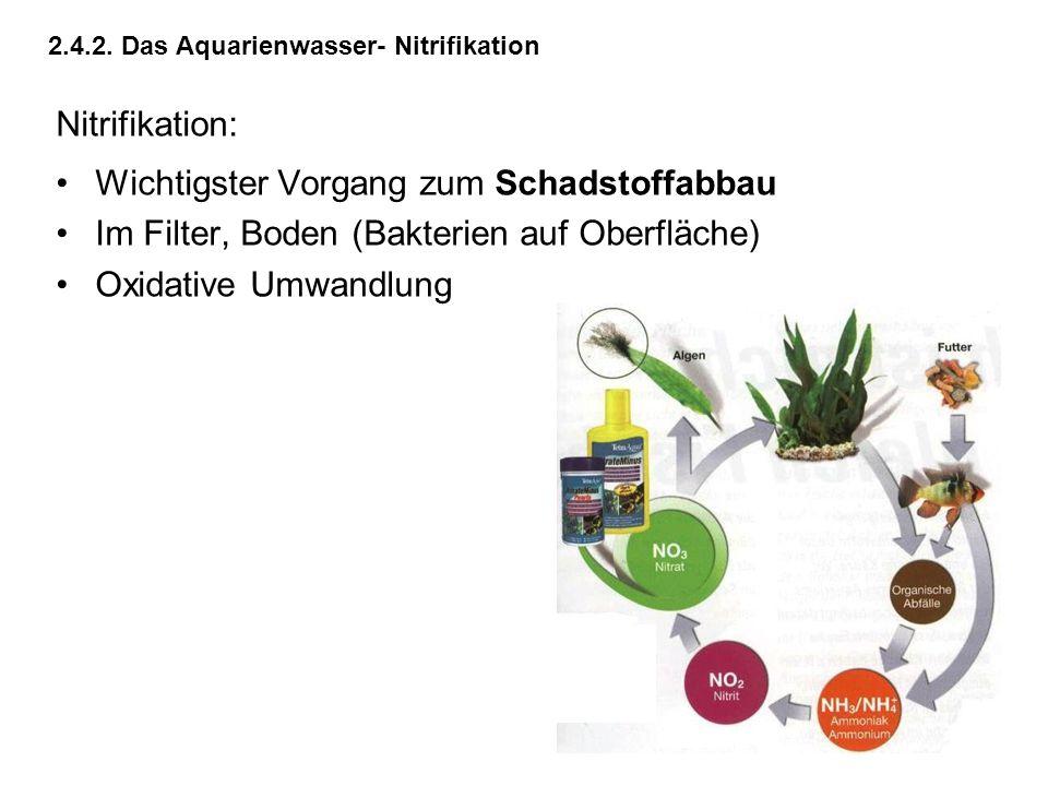 2.4.2. Das Aquarienwasser- Nitrifikation