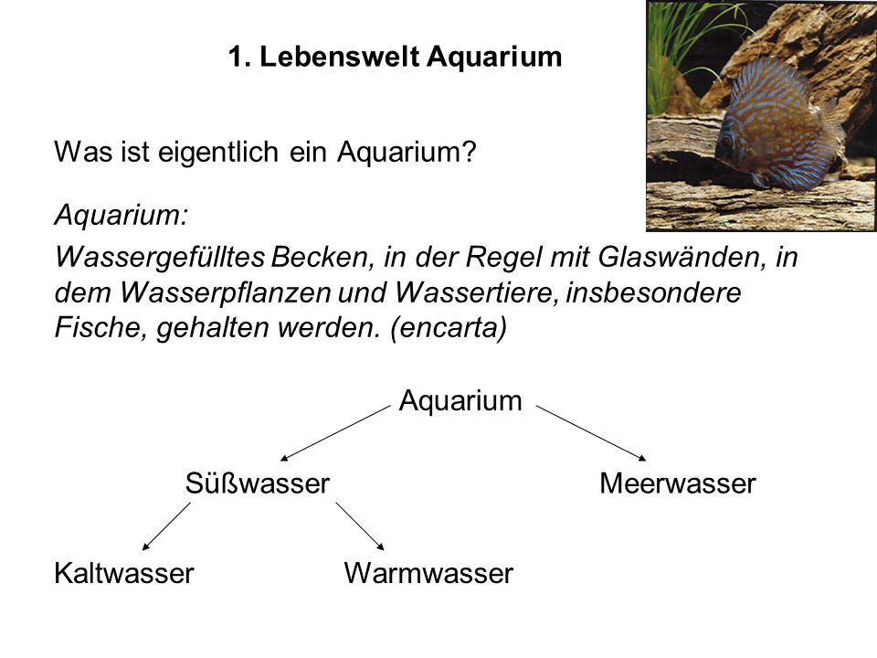 1. Lebenswelt Aquarium Was ist eigentlich ein Aquarium Aquarium: