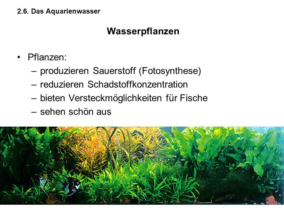 produzieren Sauerstoff (Fotosynthese)