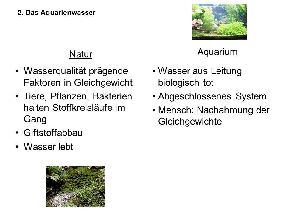 Wasserqualität prägende Faktoren in Gleichgewicht