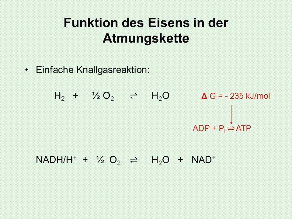 Funktion des Eisens in der Atmungskette