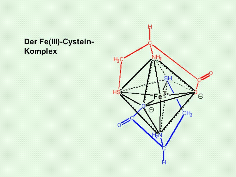 Der Fe(III)-Cystein-Komplex