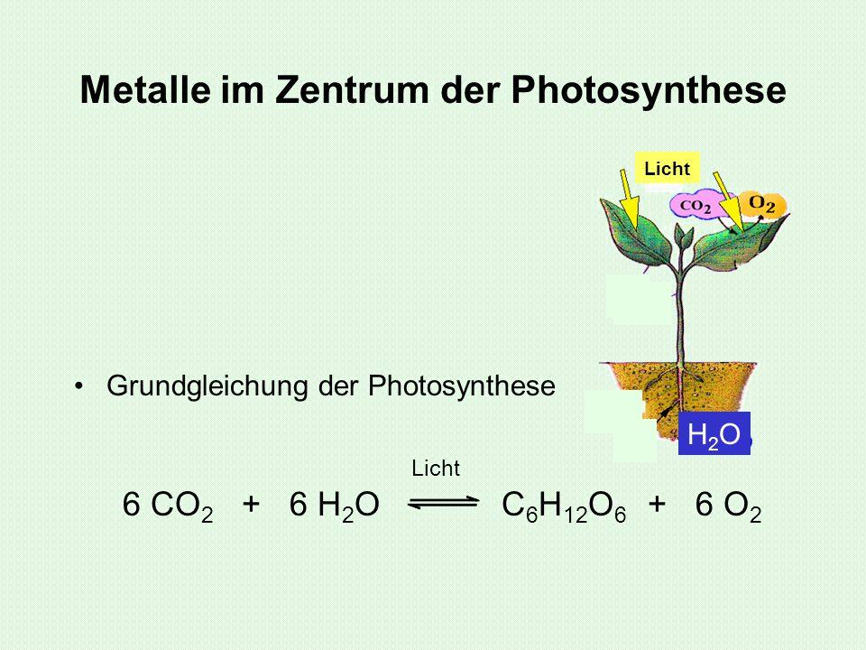 Metalle im Zentrum der Photosynthese