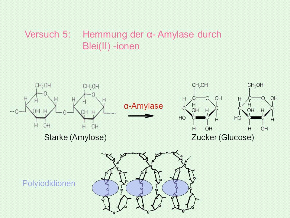 Versuch 5: Hemmung der α- Amylase durch Blei(II) -ionen