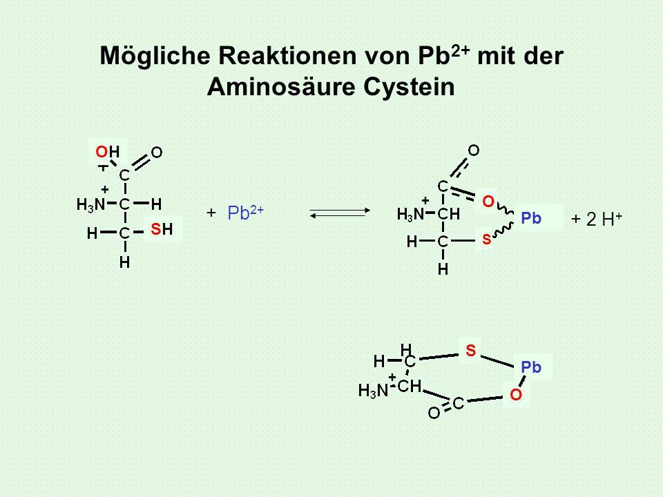 Mögliche Reaktionen von Pb2+ mit der Aminosäure Cystein