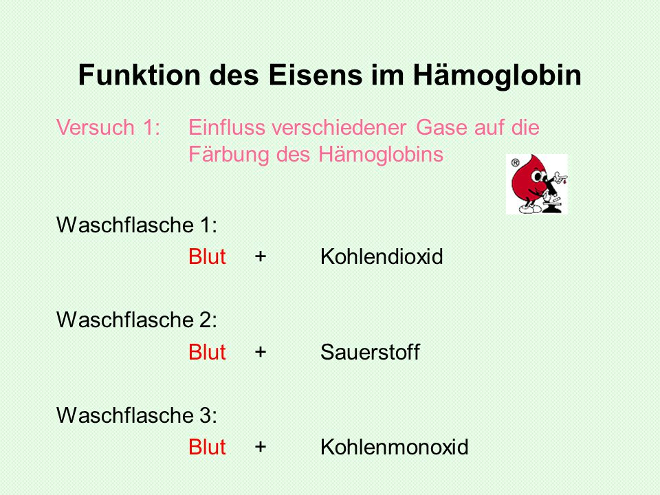 Funktion des Eisens im Hämoglobin