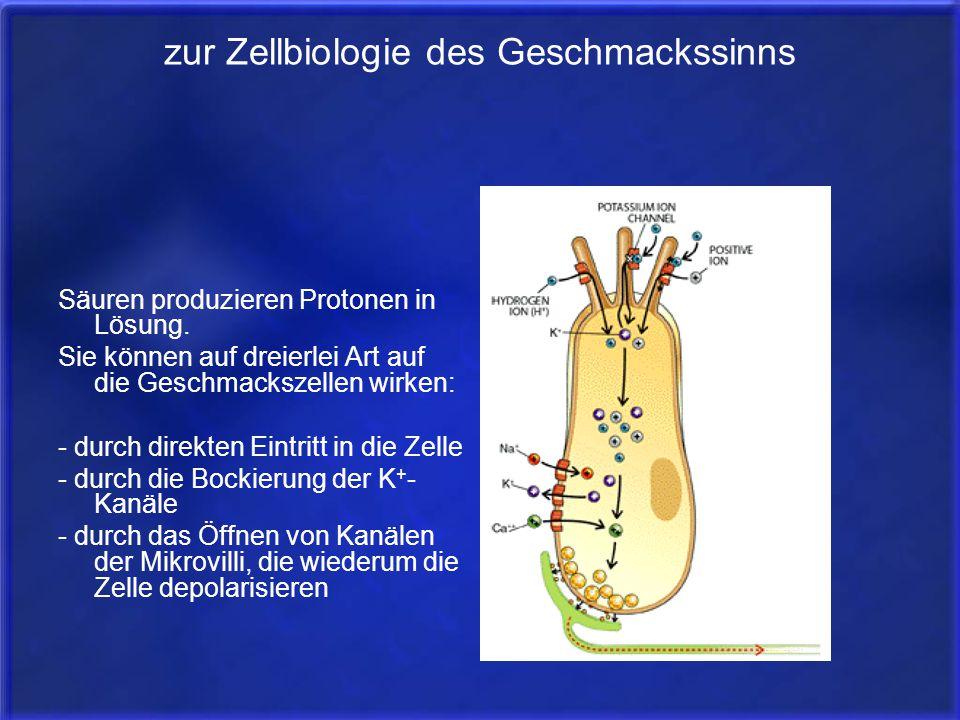 zur Zellbiologie des Geschmackssinns