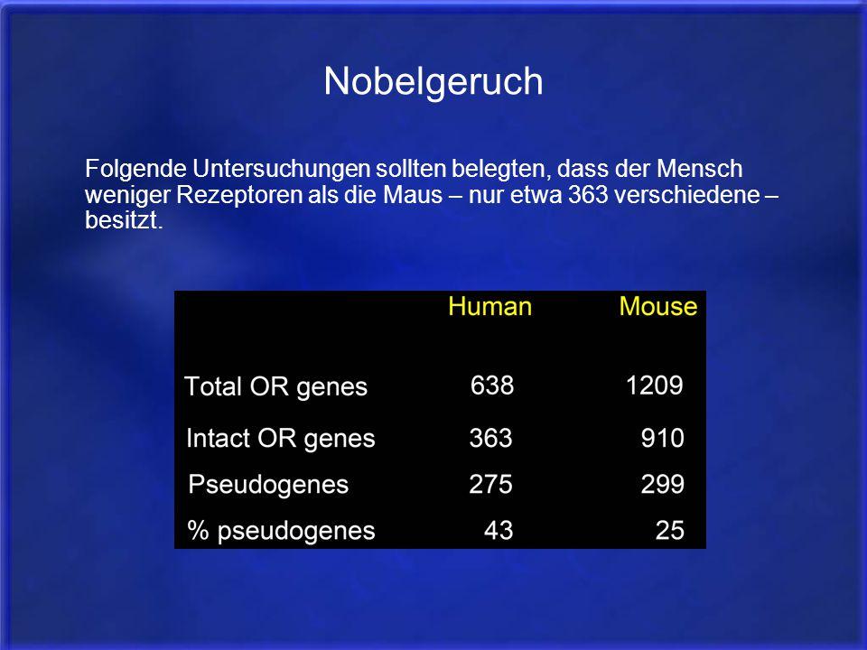 Nobelgeruch Folgende Untersuchungen sollten belegten, dass der Mensch weniger Rezeptoren als die Maus – nur etwa 363 verschiedene – besitzt.