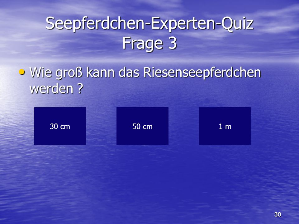 Seepferdchen-Experten-Quiz Frage 3