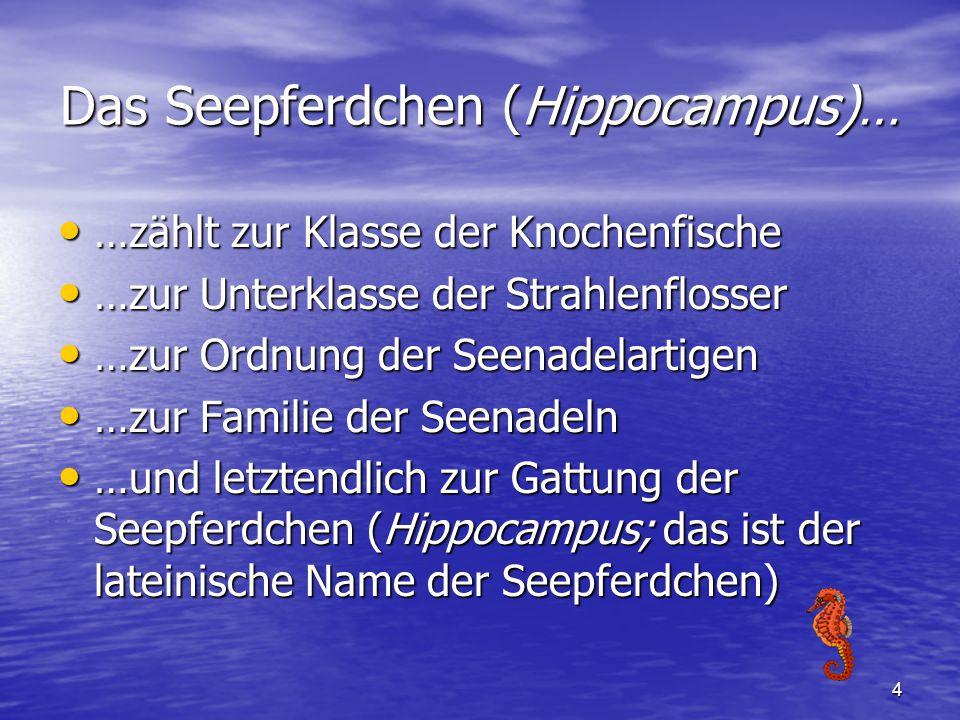 Das Seepferdchen (Hippocampus)…