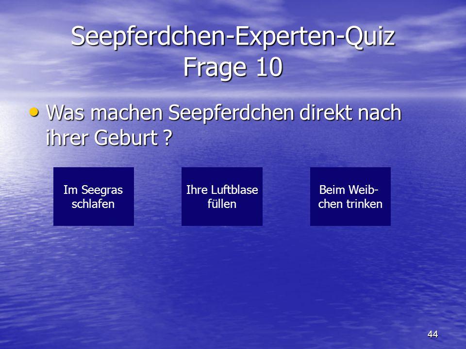 Seepferdchen-Experten-Quiz Frage 10