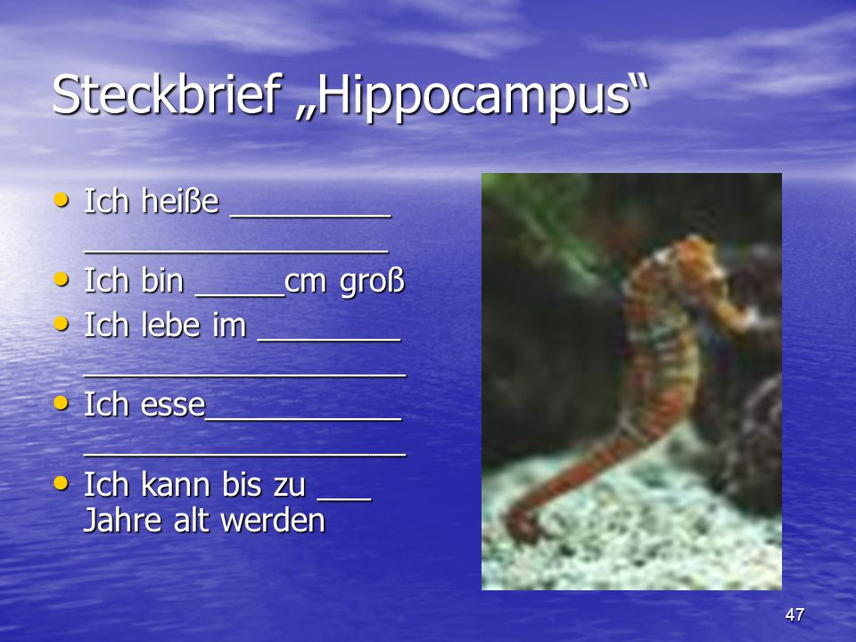 arbeitsblatt vorschule 187 kaninchen referat foto